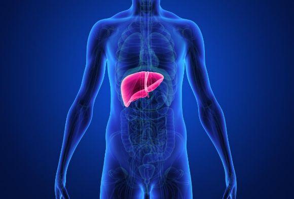 liver_SC
