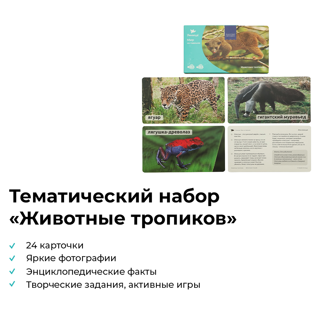 Тигр Мир на ладошке Умница 2001  фотографии и картинки